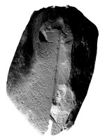 View of side B of orthostat within satellite tomb 14, Knowth (light from SW)