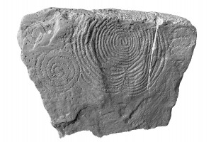Shaded elevation image of decorated kerbstone 51, Knowth